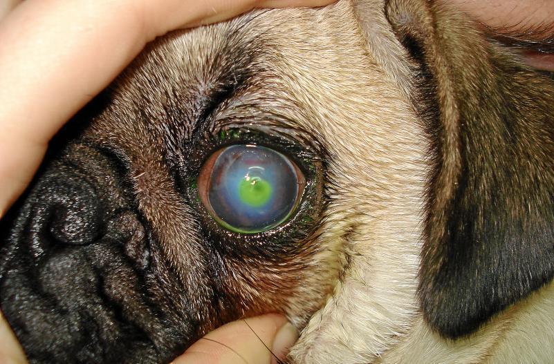 secrecion en los ojos del perro